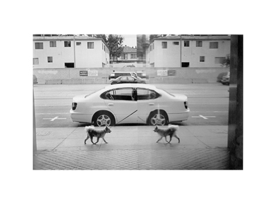 Image of Dog Reflections, Santa Monica 2001 by David Peat