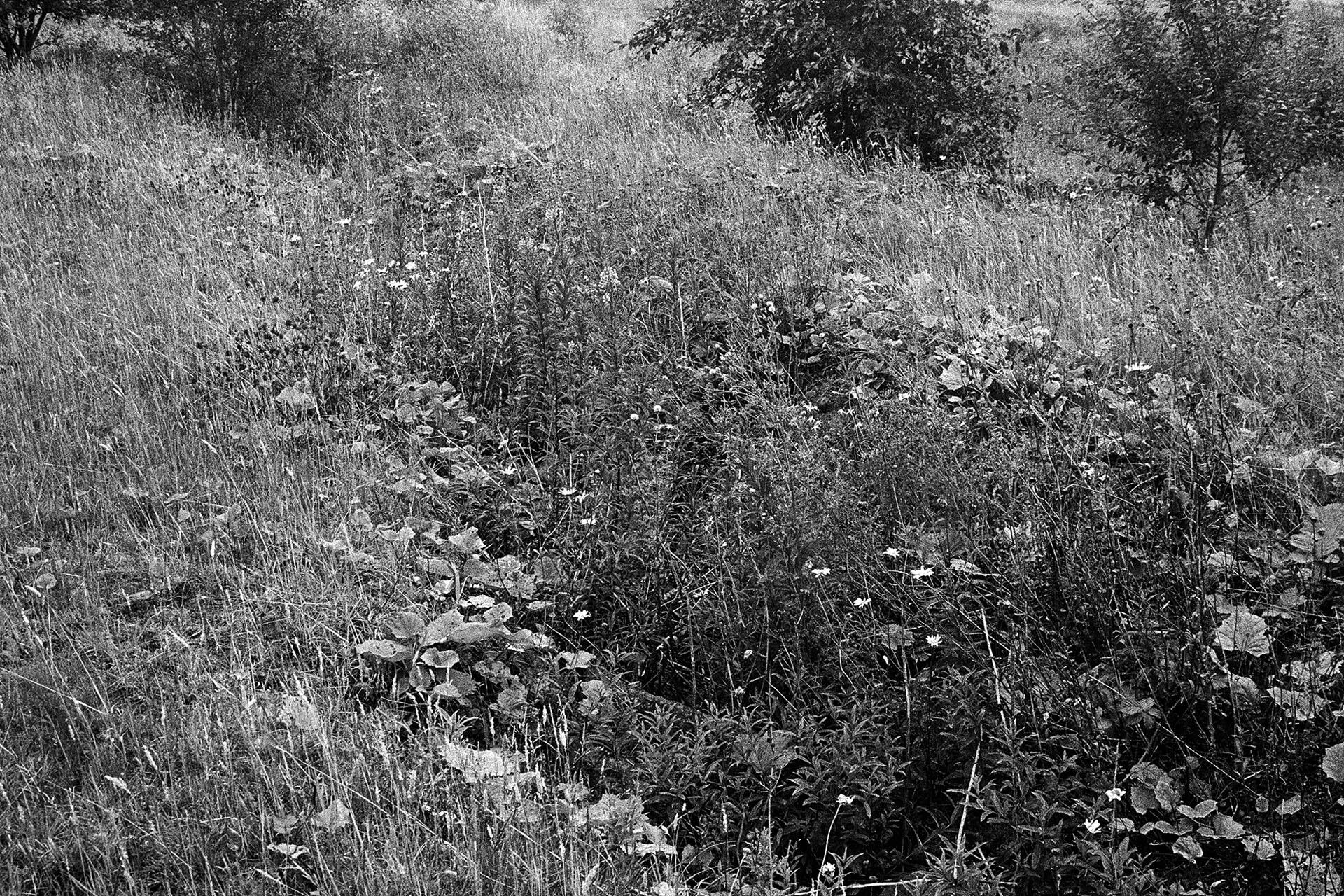 John Farrell - Unofficial Countryside