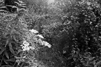 John Farrell - Wild Flowers
