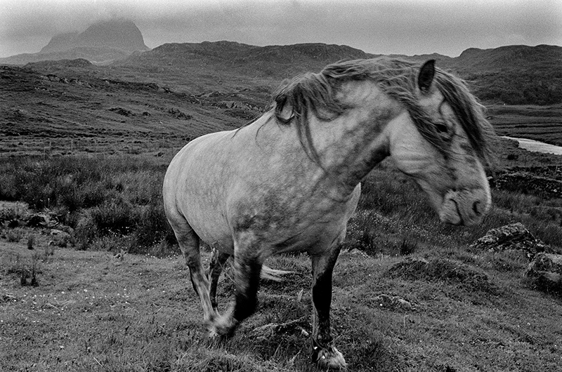 Image of Suilven Stalking Pony by Glyn Satterley