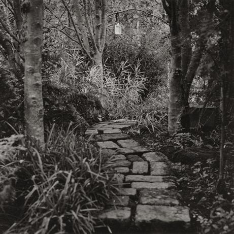 Image of Albrecht Durer Tree Plaque (1997) by Robin Gillanders