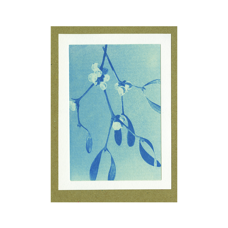 Image of Mistletoe Cyanotype Card by Mhairi Law
